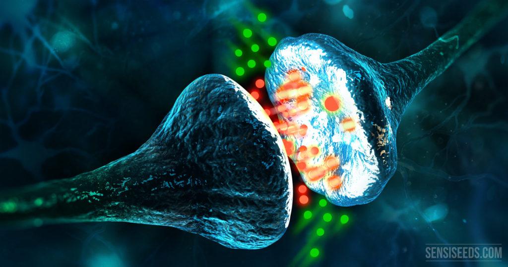 Système endocannabinoide sur LaFleur