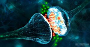 Système endocannabinoide